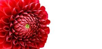 Czerwonych dalia kwiatu szczegółów fotografii granicy makro- rama Obrazy Royalty Free