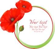 Czerwonych maczków round kwiecista rama Fotografia Stock