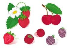 czerwonych owoców ilustracji