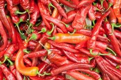 Czerwonych pieprzy tła tekstura czerwony pieprz, gorący czerwony pieprz, czerwony chili, przyprawowa papryka, ognisty czerwony pi Obraz Stock