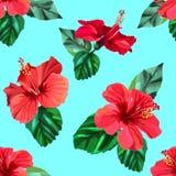 Czerwonych poślubników tropikalnych kwiatów bezszwowy wzór Obraz Royalty Free