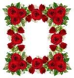Czerwonych róż i łyszczec kwiatów rama Obrazy Stock