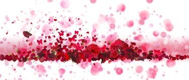 Czerwonych róż i motyli sztandar zdjęcie royalty free