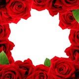 Czerwonych róż intern fotografia royalty free