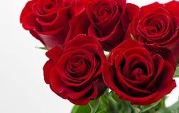 Czerwonych róż tła walentynek dnia biała Ślubna karta obraz stock