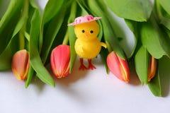 Czerwonych tulipanów kurczaka pozycji zieleni liści żółte menchie przewodzą obrazy stock