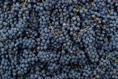 Czerwonych win winogron tło Fotografia Stock
