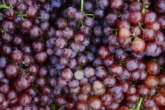 Czerwonych win winogrona od winogrona plantaion po harvestHealthy, słodkiego i świeżego grapefruitowego wzoru dla tła, zdjęcia royalty free