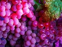 Czerwonych win winogrona z zielenią leaves1 Obrazy Stock
