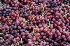 Czerwonych winogron tło Zdjęcia Stock