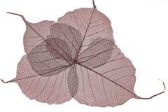 Czerwonych wysuszonych liści kośców zamknięty up Obrazy Stock