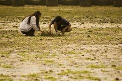 czesanie na plaży Obraz Royalty Free