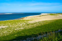 czesarki przy Cape Cod Zdjęcie Royalty Free