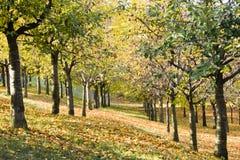 czeska wzgórza petrin Prague republika Zdjęcie Royalty Free