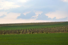 czeski Moravia regionu republiki winnica Obraz Stock