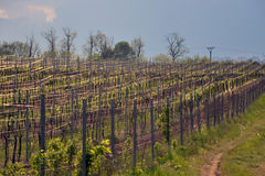 czeski Moravia regionu republiki winnica Zdjęcia Stock