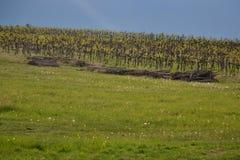 czeski Moravia regionu republiki winnica Zdjęcia Royalty Free