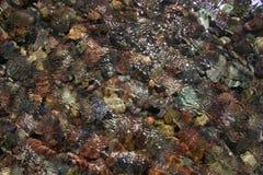 Czochry i Coloured kamienie Fotografia Stock