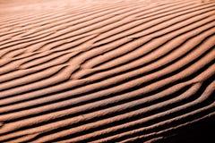 Czochry na piasku II Obrazy Royalty Free
