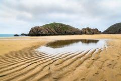 Czochry w piasku obrazy royalty free