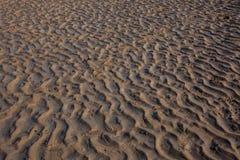 Czochry w piasku Obraz Royalty Free