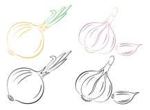 czosnek cebula ilustracja wektor
