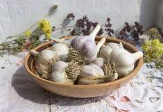 Czosnek w glinianym pucharze, organicznie uprawiać ziemię, ziele Zdjęcie Royalty Free