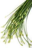 Czosnków szczypiorki na bielu Fotografia Royalty Free