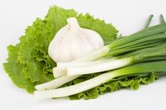 czosnku sałaty cebul wiosna zdjęcie stock