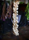 Czosnku sznurek z wysuszonymi ziele i świeżymi warzywami w śpiżarni obrazy royalty free