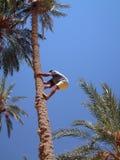 człowiek palmowi Fotografia Royalty Free