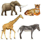 Cztery Afrykańskiego zwierzęcia Zdjęcie Stock