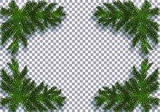 Cztery błękitna realistyczna jodła rozgałęzia się z cieniem Umieszczający w kątach Odizolowywający na przejrzystym tle Boże Narod ilustracji