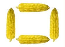 Cztery biel tła kukurudzy głowa Zdjęcia Stock