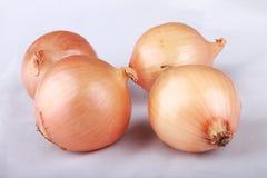 Cebule na białym tle Zdjęcia Royalty Free