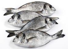 Cztery dorado rybiego odosobniony na białym tle Zdjęcia Royalty Free