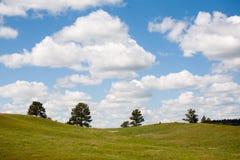 cztery drzewa obrazy royalty free