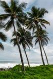 Cztery drzewka palmowego siedzą na wybrzeżu Zdjęcia Stock