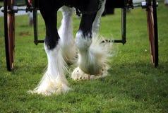 Cztery końskiego kopyta z fur kołami Obrazy Royalty Free