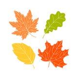 Cztery koloru liścia Obraz Stock