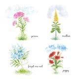 Cztery kwiatów kwitnący pole Obrazy Stock