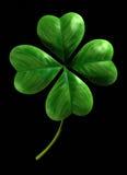 cztery leafed shamrock Zdjęcia Royalty Free