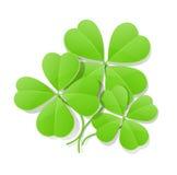 Cztery liść koniczyna dla świątobliwego Patrick dzień Fotografia Royalty Free