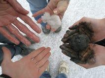 Cztery ludzie trzymają różne skały słone jezioro w ich ręce obraz stock