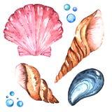 Cztery morze skorup Handdrawing akwareli Jaskrawa ilustracja Wysoka Rozdzielczość Ilustracja Wektor