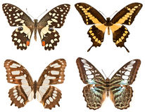 Cztery motyla na białym tle Zdjęcie Royalty Free