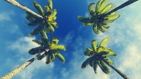 Cztery niebieskiego nieba i drzewka palmowe Zdjęcie Stock