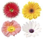 cztery odizolowane kwiaty Obrazy Royalty Free