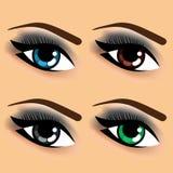 Cztery oka z różnymi oko kolorami Fotografia Royalty Free