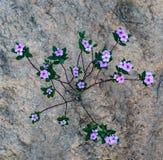 Cztery płatków kwiat fotografia stock